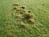 lubin-hriste-prirodni-travnik-02