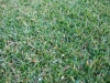 lubin-hriste-prirodni-travnik-17