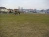 rynholec-hriste-umely-travnik-001